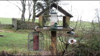 The Bird Table / January