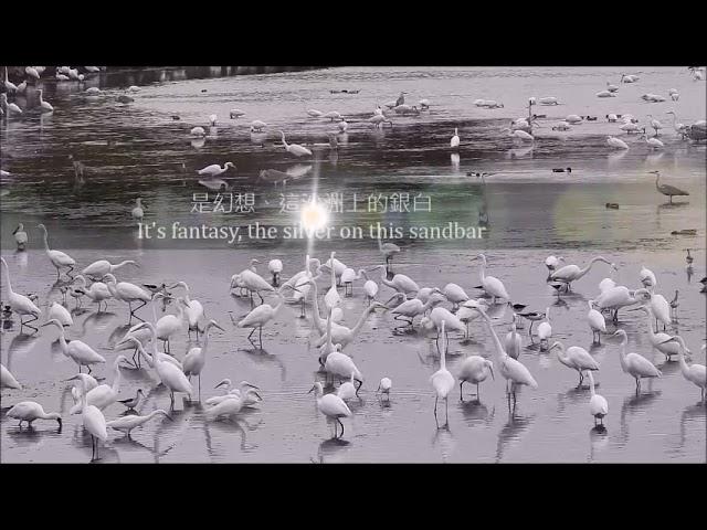 大白鷺---雪客紛飛Great Egret --The heavy snow is coming as a guest