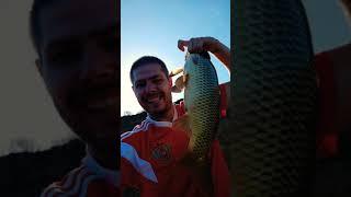 Сазан сумасшедшие поклевки рыбалка Волга рыбалка на жмых