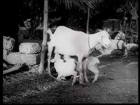 Veedu Varai Uravu Super Hit Video Song    Paadha Kaanikkai Tamil Movie    Gemini Ganesan, Savitri