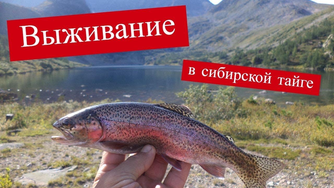 Чуть не умерли с голода. Выживание в Сибирской тайге