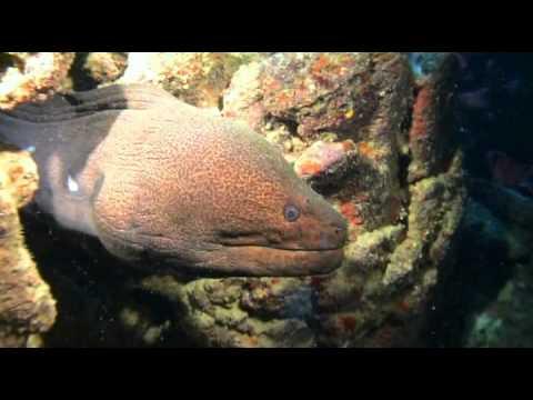 Plongée mer rouge Le tombant St John Red sea Dive St John's Reef
