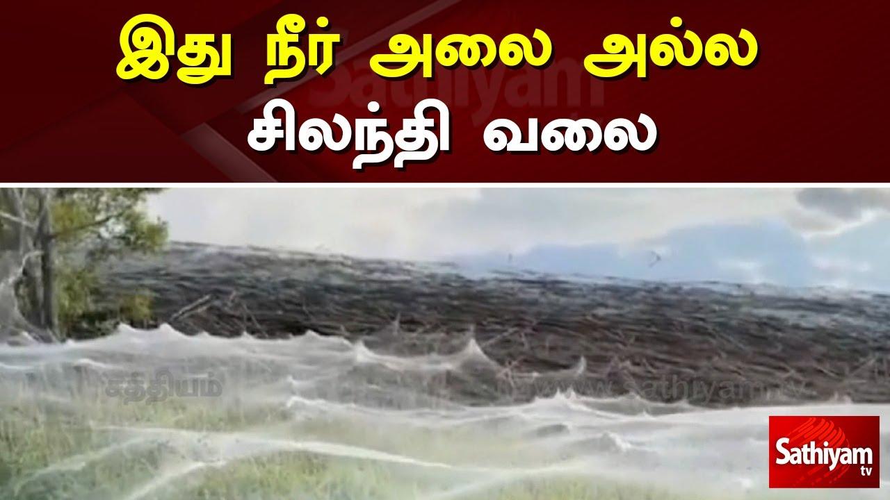 இது நீர் அலை அல்ல சிலந்தி வலை   Spider   Tamil nadu   Sathiyam TV