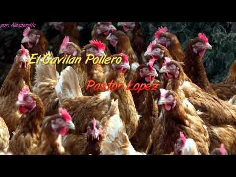 El Gavilan Pollero - Pastor Lopez [Lyrics Tipo Karaoke]