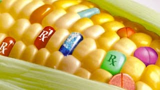 10 Worrying Facts About Genetically Modified Food