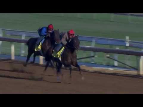 Bayern - Top Breeders' Cup Classic Contender Works (10.13.14)
