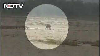Video: Elephant, Stranded In Rain-Battered Uttarakhand, Rescued