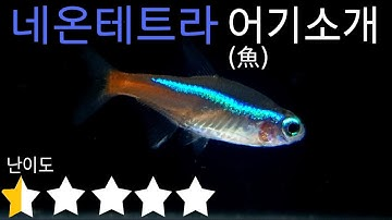 #21 네온테트라 어(魚)기소개