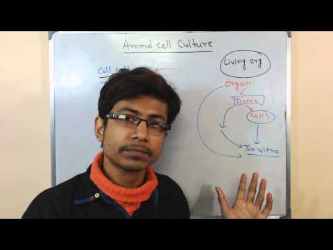 Mammalian cell culture 1 - introduction to cell culture