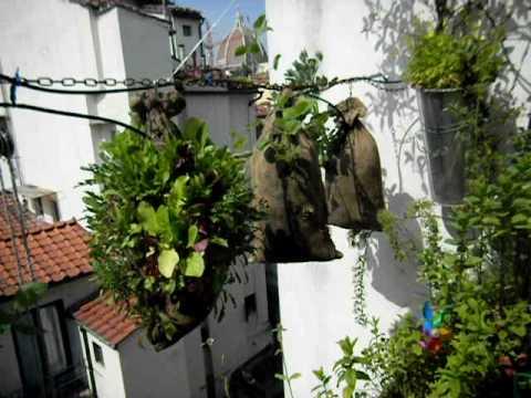 Attractive Hanging Vegetable Garden   YouTube