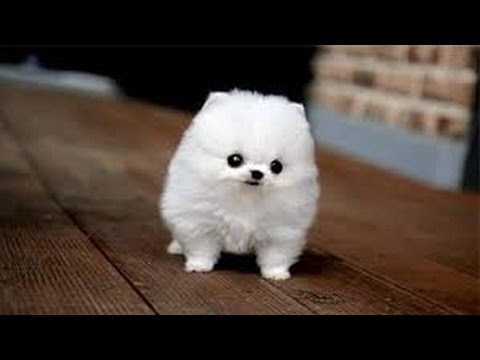 Small Cute Dogs That Never Grow