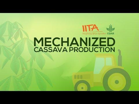 Mechanized Cassava Production