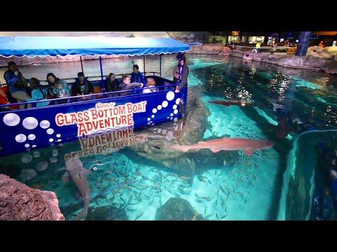 Glass Bottom Boat Adventure in Shark Lagoon / Ripley's Aquarium of The Smokies + Penguin Encounter