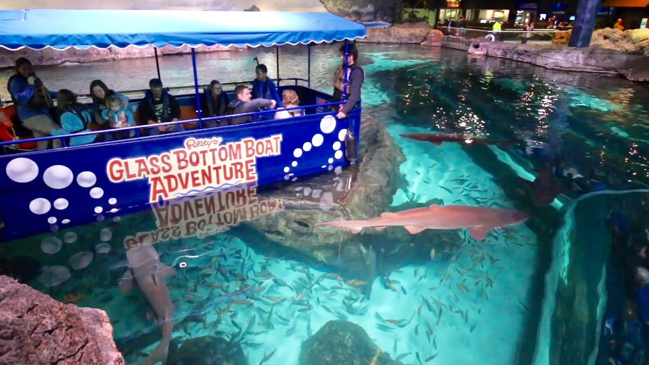 Gl Bottom Boat Adventure In Shark Lagoon Ripley S Aquarium Of The Smokies Penguin Encounter