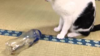 NHKの「ためしてガッテン」みて、さっそく猫のおもちゃ作ってみました #...