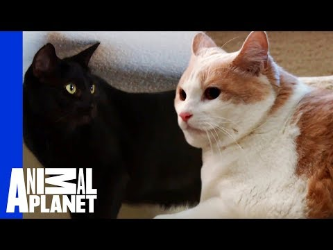 Jackson Galaxy Helps Scout The Cat Face His Fear! | My Cat From Hell