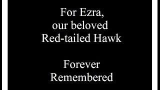 A Tribute To Ezra, 3/25/2017 (HD)