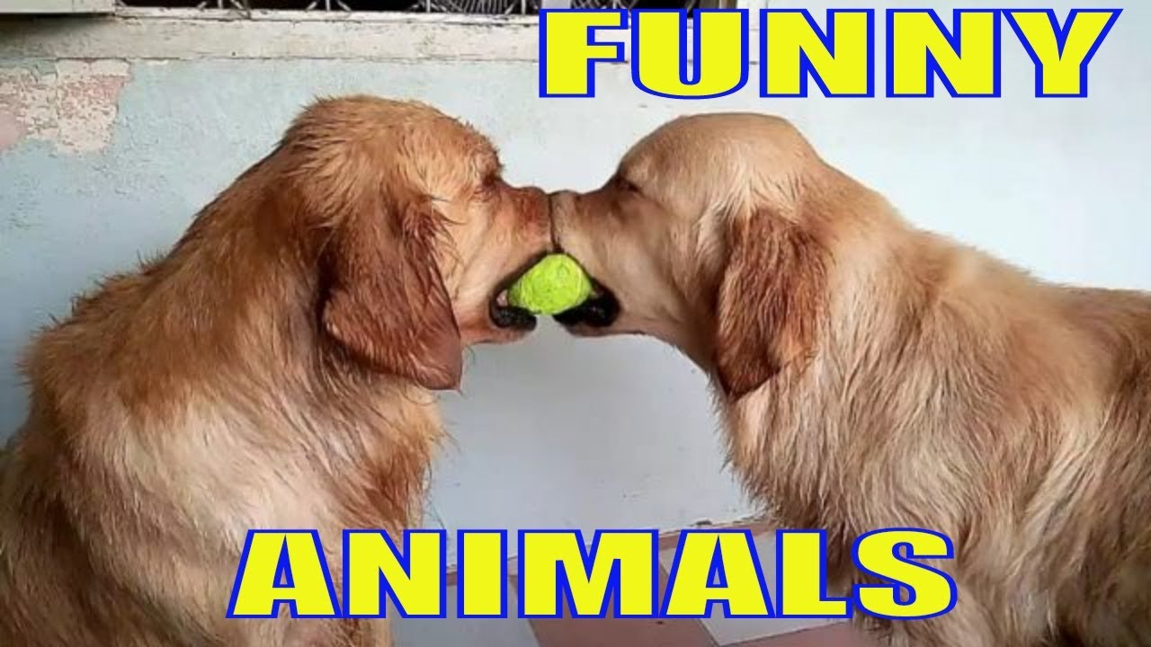 Funny Pet Videos from Funny Stories Channel | Funny Videos 2018
