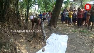 3 Monocled Cobra Rescue From: Dhusuri, Bhadrak