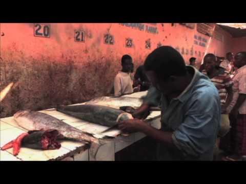 Somalia: Reviving the Fishing Industry