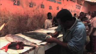 Somalia: Reviving the Fishing Industry