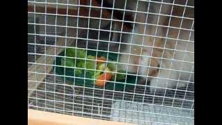 English Angora Outdoor Bunny Hutch