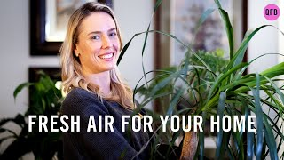 Indoor Plants One On One | Top Indoor Plants For Beginners 🌱|  Plants make Us Happier 😃
