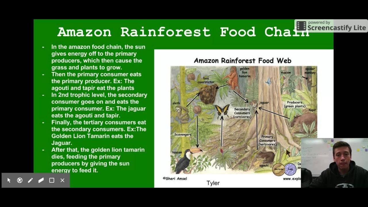Ecosystem Biology Project - Amazon Rainforest - YouTube