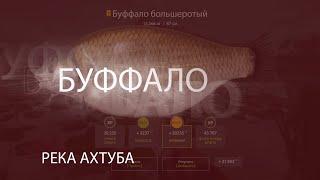 Русская Рыбалка 4 РР4 RF4 Река Ахтуба Буффало