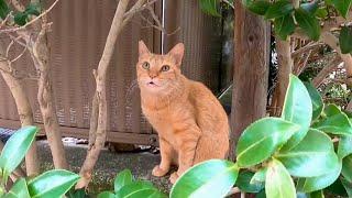 一旦は逃げたた野良猫だったが少しずつ撫でられに来るようになった