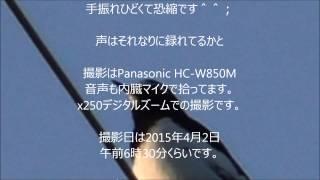 撮影:Panasonic HC-W850M 場所:奈良県奈良市.