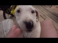 Racist comment put me off, and Puppies! Day 21 of 96 How to bike tour 4k HD