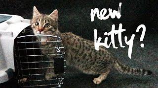 Should I Keep This Cat? thumbnail