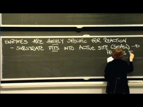 Biochemical Reactions, Enzymes, and ATP | MIT 7.01SC Fundamentals of Biology
