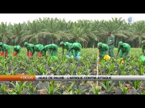 Huile de palme   l'Afrique contre attaque