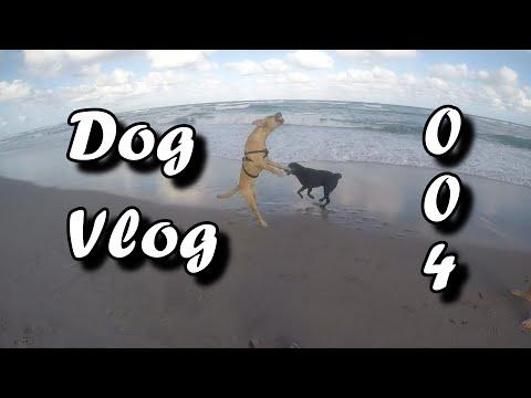 Dog Vlog - Crazy Jumping Dog
