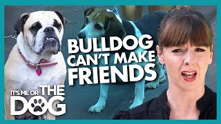 Bulldog Needs to Learn Some Doggy Manners |  It's Me or The Dog