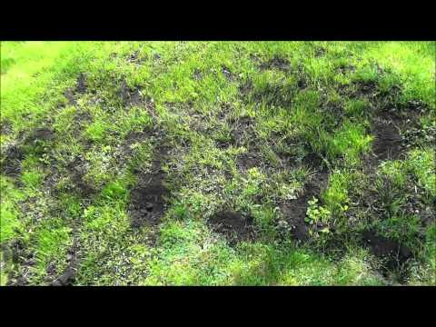 How To Level Uneven Spots In Your Lawn (DIY Lawn Care)
