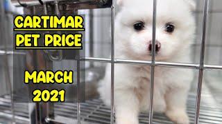 CARTIMAR PET PRICE MARCH 2021 UPDATE (Alaskan Malamute, Doberman, Corgi, French Bulldog and more)