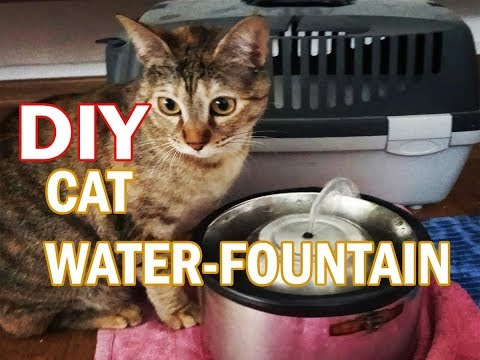 DIY Water-Fountain For Cats