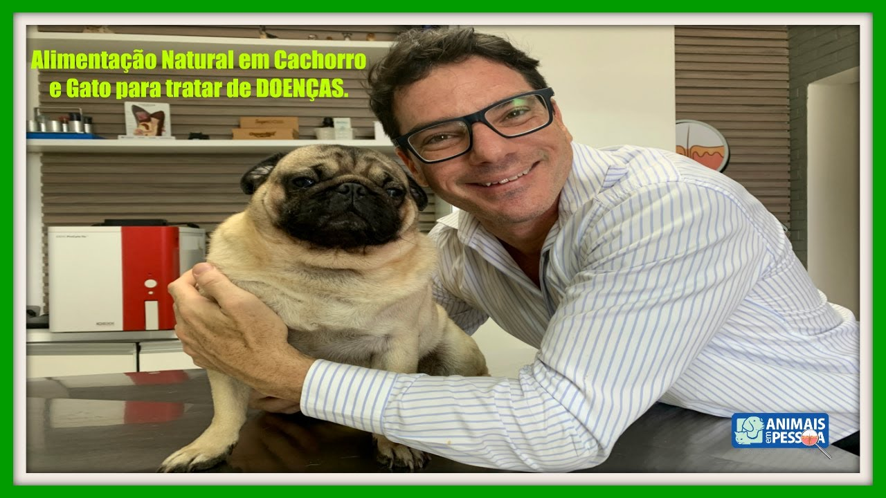 ALIMENTAÇÃO NATURAL PARA CACHORROS E GATOS DOENTES. #alimentacaonatural #animaisempessoa #cachorro