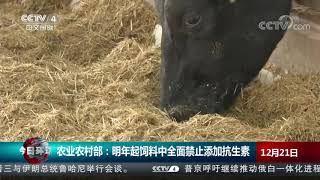 [今日环球]农业农村部:明年起饲料中全面禁止添加抗生素  CCTV中文国际