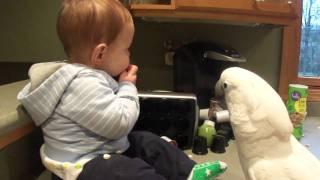 【まったり】赤ちゃんとオウム、一緒におやつを楽しむ