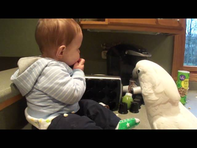 Cockatoo and Baby share snacks 4 15 11