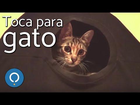 Camisetas de gatos → Las ⑥④ mejores camisetas de gatos