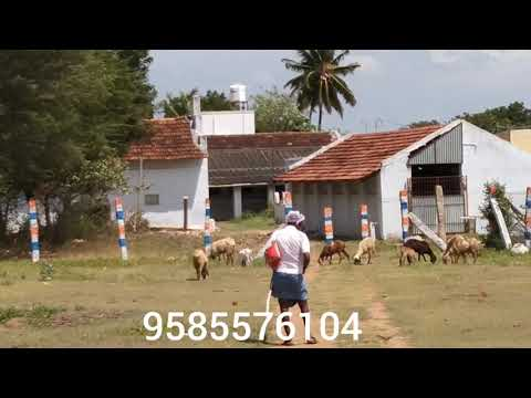 Farm house land property for sale vadavalli to Thondamuthur road coimbatore