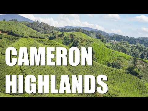 THE BEST OF CAMERON HIGHLANDS - MALAYSIA'S BUCKET LIST