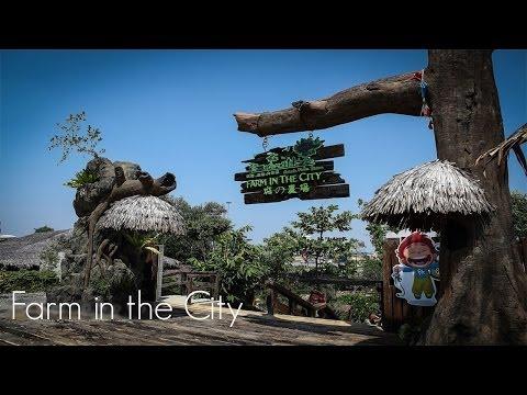 Pengalaman Oh! Media Ke Farm In The City, Seri Kembangan