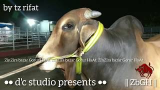 185 | Deshi Bull | Afternoon outting | Samaria Cattle Farm | ZbGH 2019
