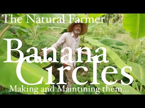 Jagannath K The Natural Farmer - Tropics - #6 Banana Circles - making and maintaining them